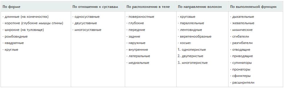 классификация мышц человека, таблица