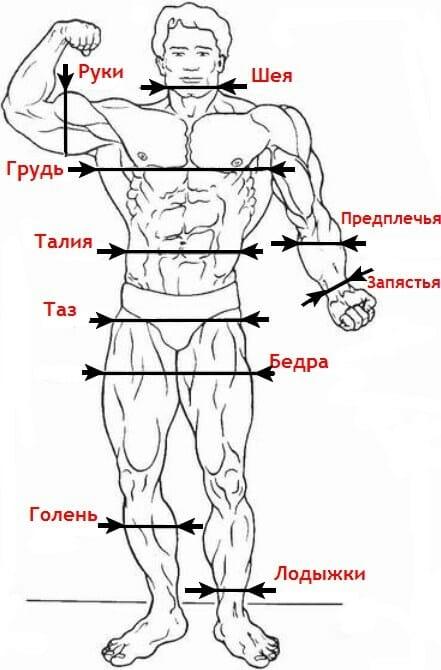 Антропометрия эксцентриков