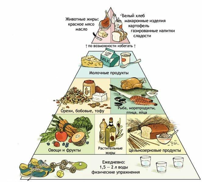 гарвардская пирамида питания