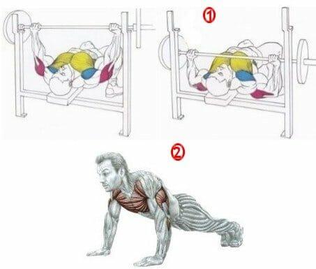 Анатомия мышц плечевого пояса
