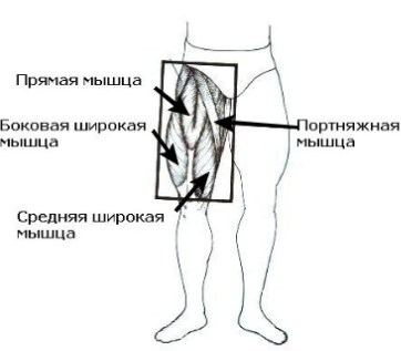 передняя поверхность бедра