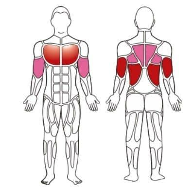 турник и мышцы воздействия