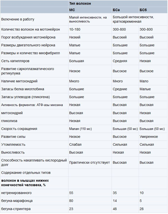 harakteristiki-myishechnyih-volokon Гипертрофия мышц. Как растут мышцы [Часть №3, практическая].