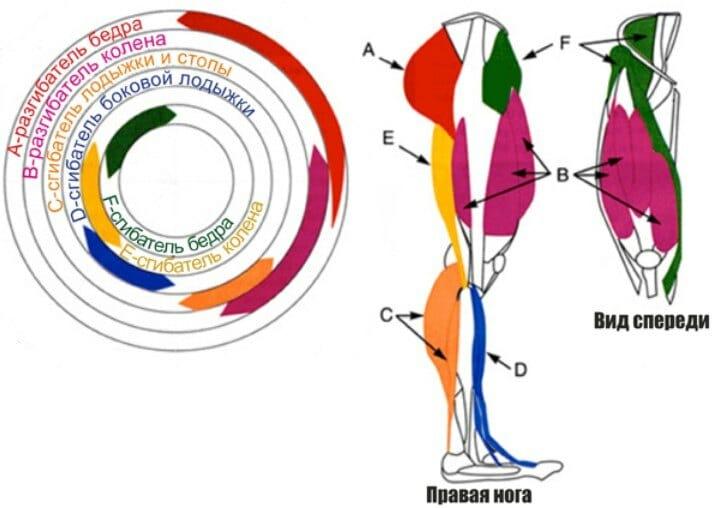мышцы, задействованные при беге