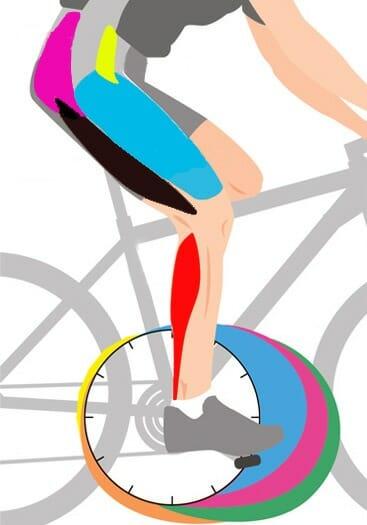 мышцы в работе, велосипед