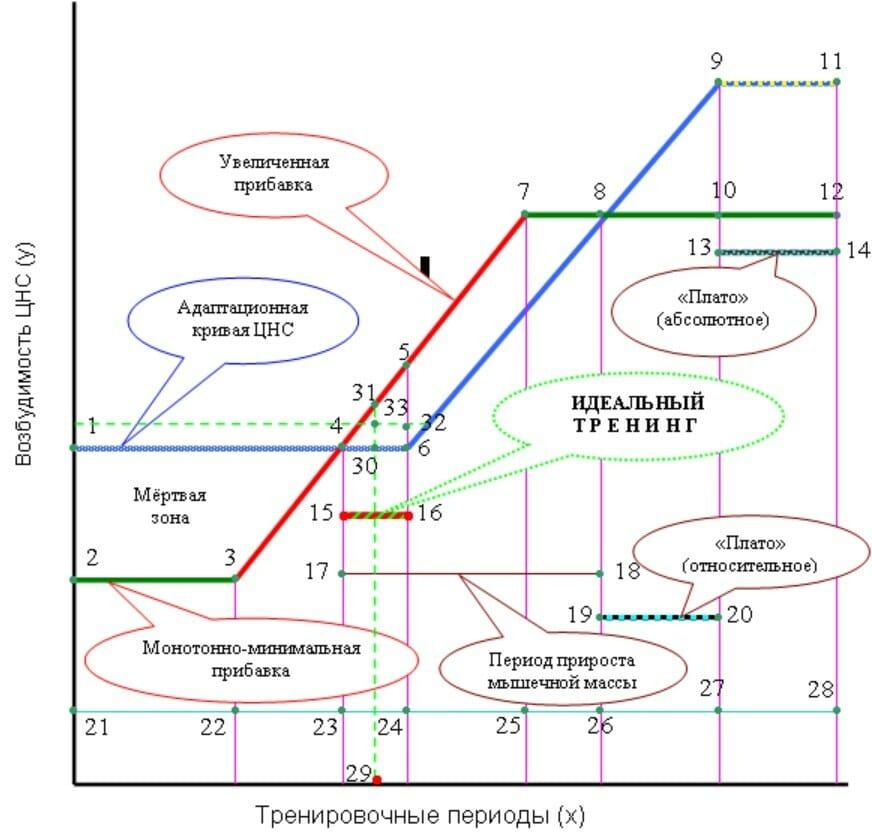 секреты бодибилдинг, адаптационный механизм при увеличении нагрузки