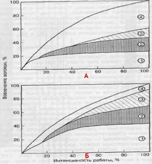 vovlecheni-volokon-v-rabotyi-intensivnost Гипертрофия мышц. Как растут мышцы [Часть №3, практическая].