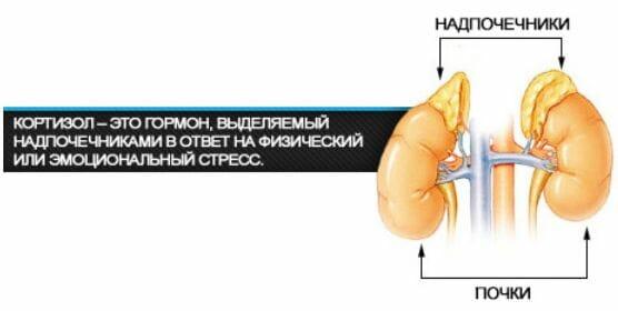 опасен высокий уровень холестерина в крови