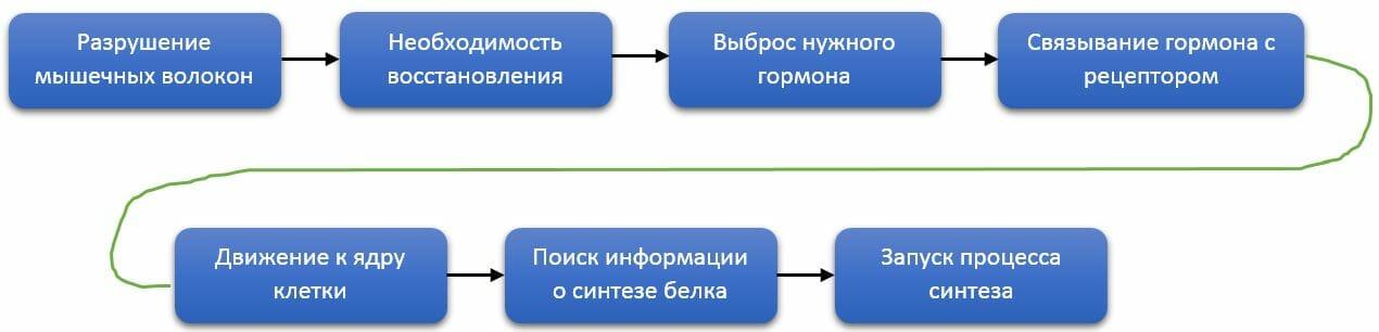 запуск синтеза белка