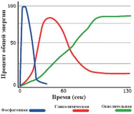 энергетические системы для поддержания мышечной активности организма