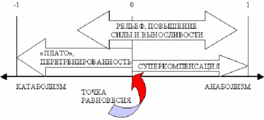 процессы в организме, схема