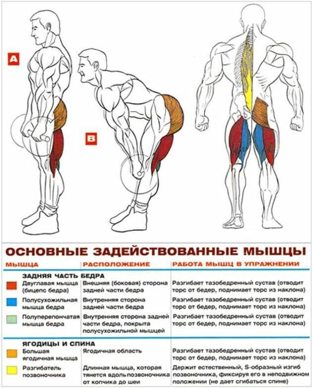 Румынская становая тяга, мышцы