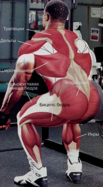 румынская становая тяга, мышцы в работе
