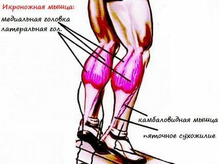 упражнение осел, мышцы