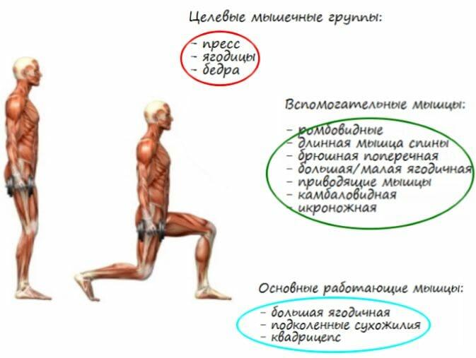 выпады с гантелями, мышцы в работе