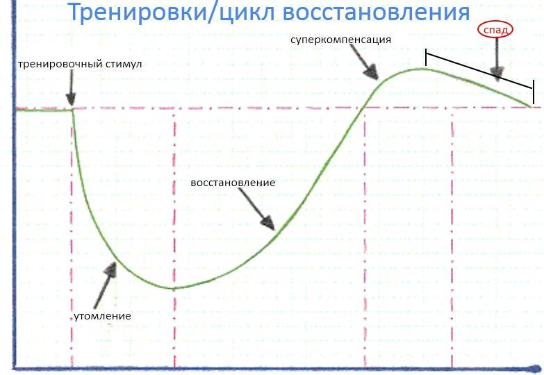фазы перетренированности