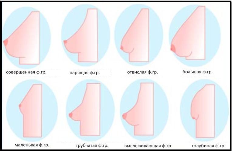 Анатомия грудь маленькой девочки соски