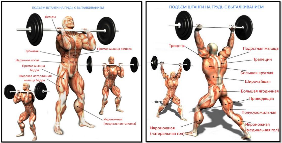 анатомия упражнения подъем штанги на грудь с выталкиванием