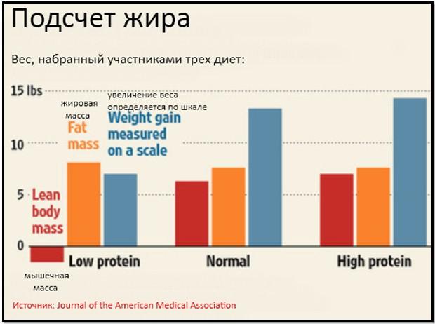 результаты исследования про белок
