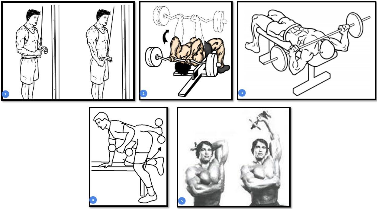 Упражнения на массу трицепса
