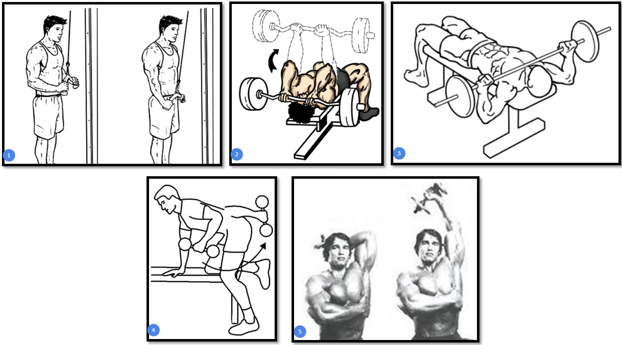 Тренировка трицепса на массу