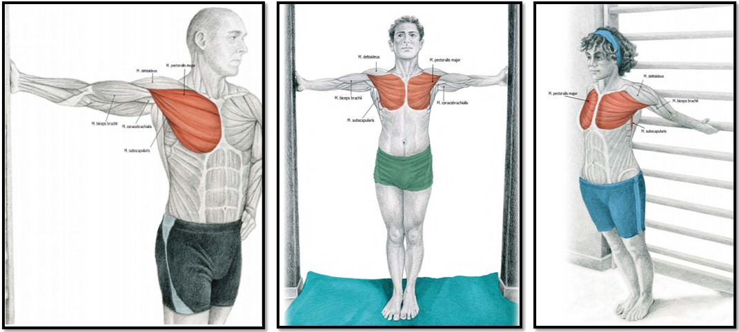упражнения на растяжку груди