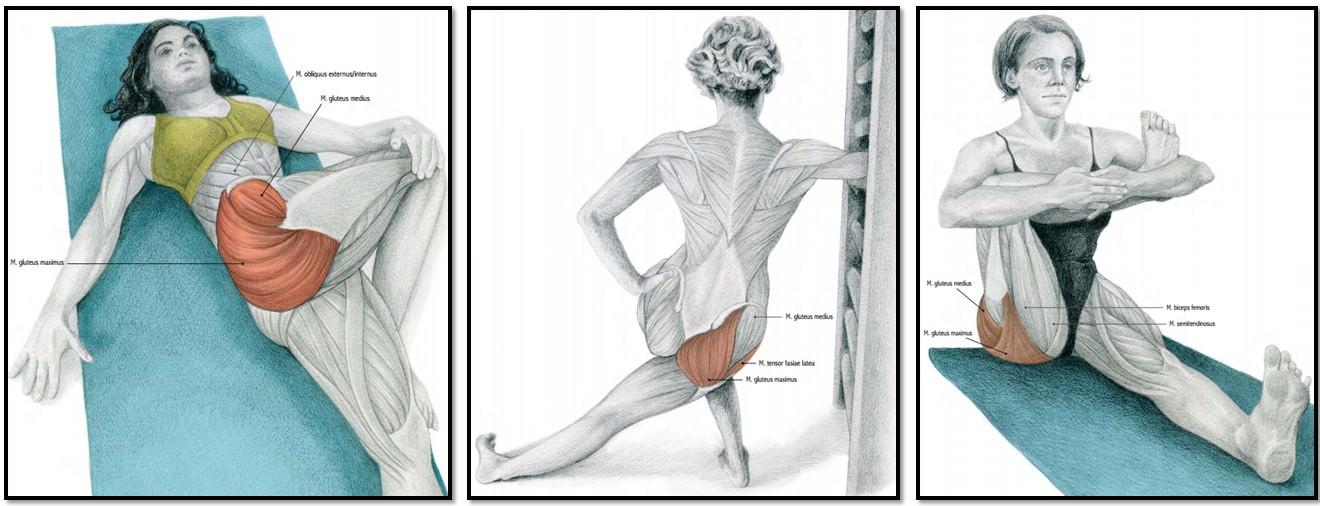 Мышечная группа ноги: ягодицы