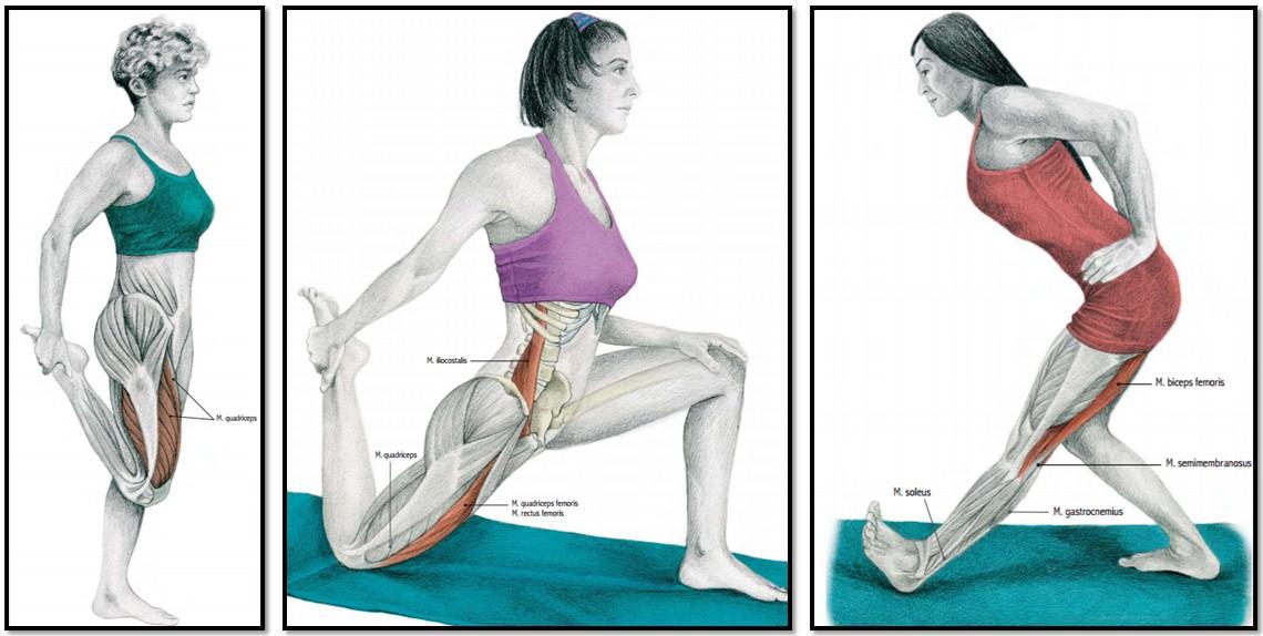 упражнения на растяжку квадрицепса и бицепса бедра