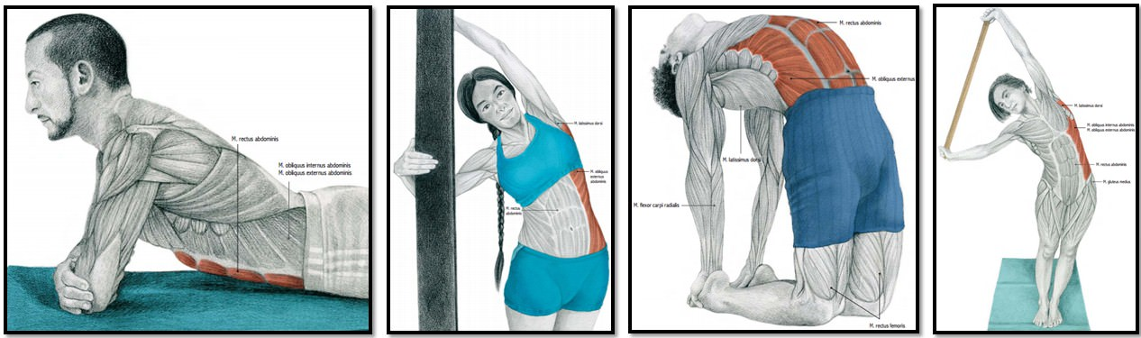 упражнения на растяжку мышц живота