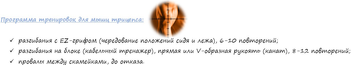 программа тренирвок для трицепса