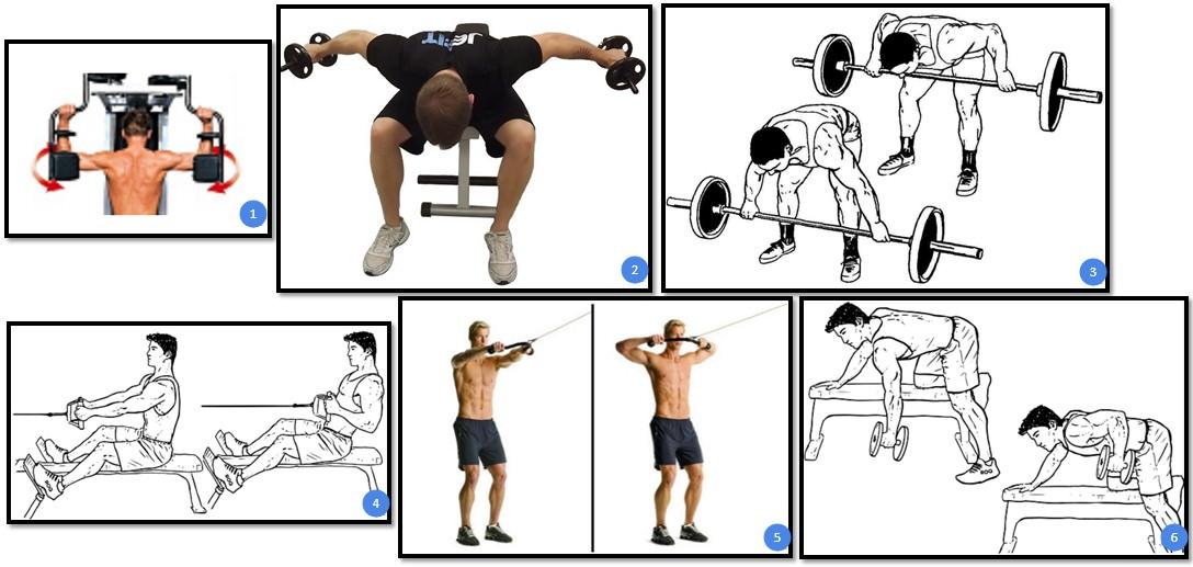 Базовые упражнения на спину с гантелями