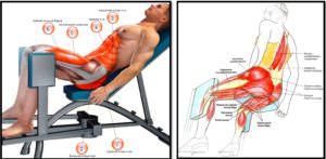 Упражнение разведение ног в тренажере: полный мышечный атлас
