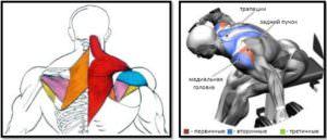 Разведение гантелей сидя в наклоне: полный мышечный атлас