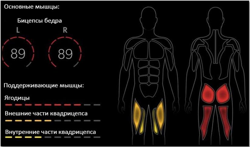 Подъем корпуса стоя на коленях в упоре: полный мышечный атлас