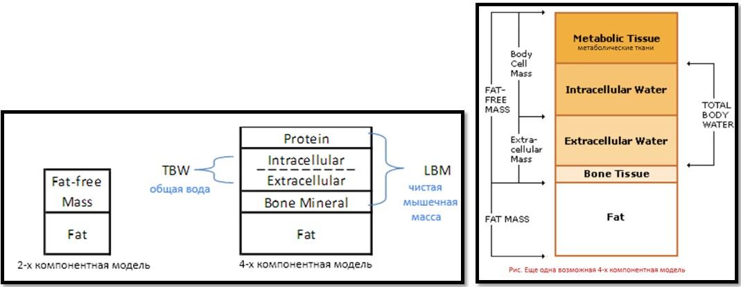 Параметрические модели метода биоимпеданс