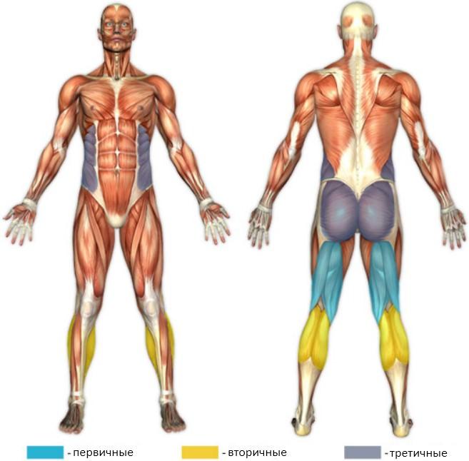 Сгибание ног на фитболе мышцы