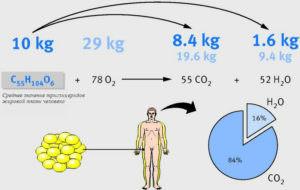 химия жиросжигания