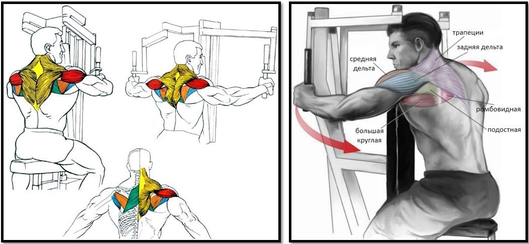 Разводка рук в тренажере