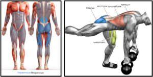 Становая тяга на одной ноге. Полный мышечный атлас