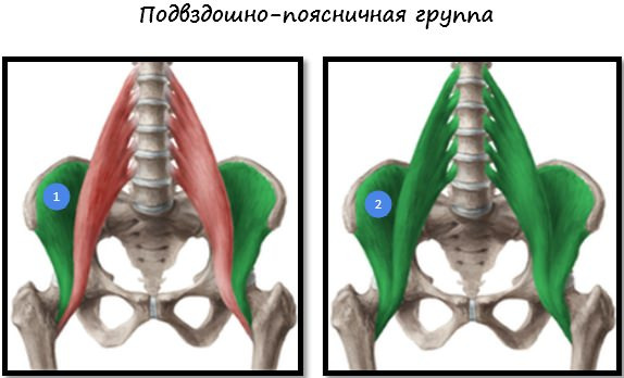 Подвздошно-поясничная группа мышц