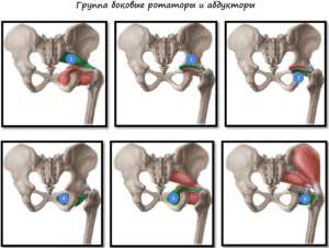 Мышцы боковые ротаторы и абдукторы
