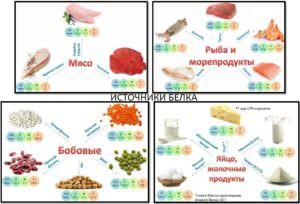 Питание для набора мышечной массы, источники белка