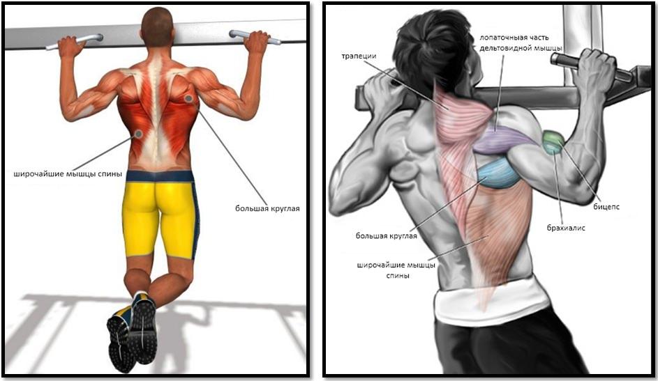 Подтягивания на турнике мышцы в работе