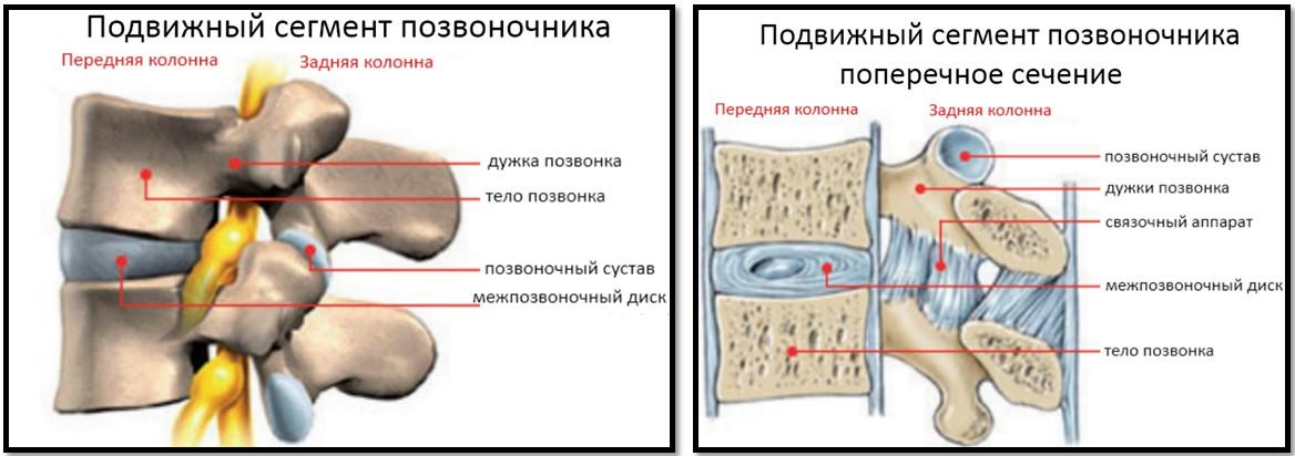 Остеохондроз и бодибилдинг.Подвижный сегмент позвоночника.