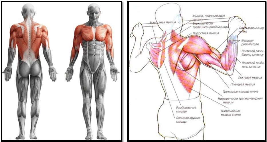 Болит спина после подтягиваний