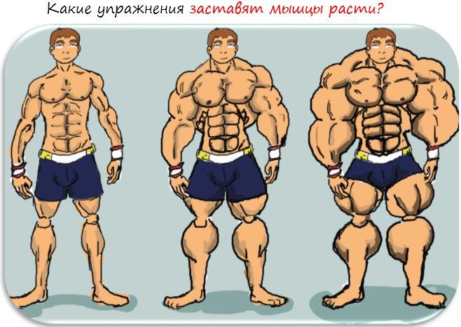 какие упражнения заставят мышцы расти