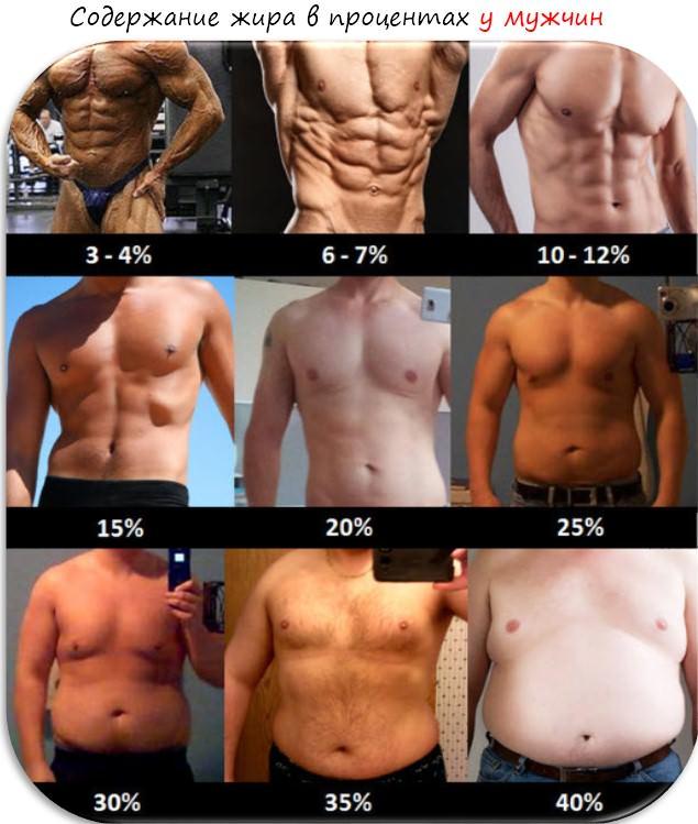 процент жира в мужском организме