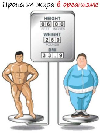 Сколько жира должно быть в человеке
