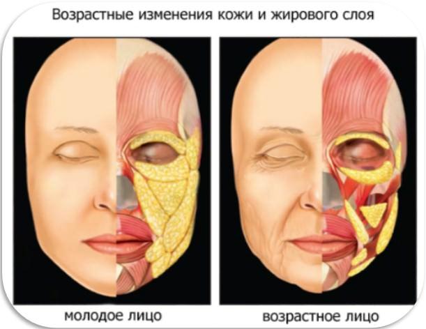 возрастные изменения кожи и жирового слоя