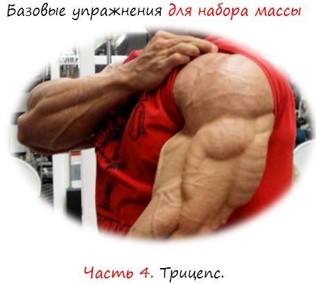 базовые упражнения для набора массы: трицепс